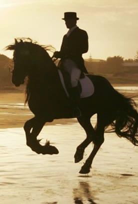 horse-on-the-beach
